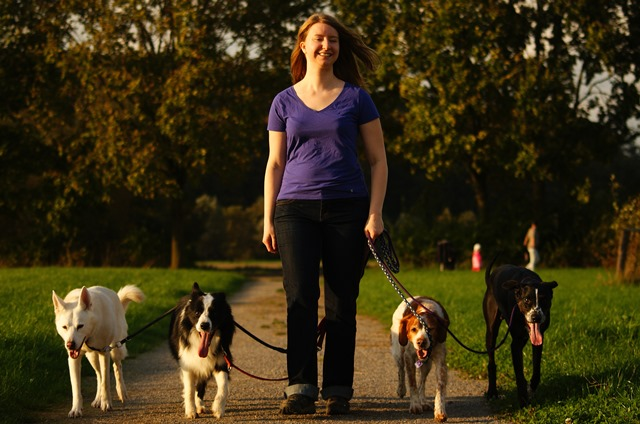 Frau Hund Spaziergang