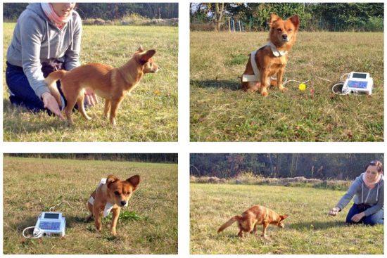handicap hunde bioresonanztherapie
