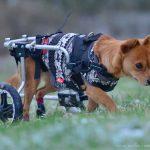 Leben mit Handicap-Hunden
