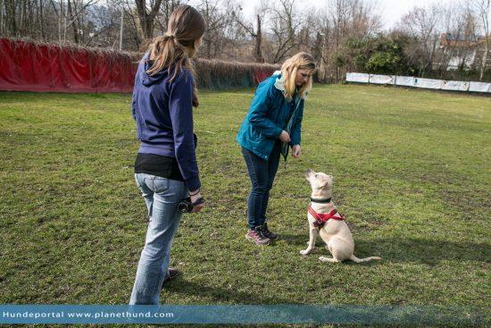 hundeschule dogdance tierheim training