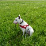 Listenhunde: Erfahrungen mit vermeintlichen Bestien auf vier Pfoten