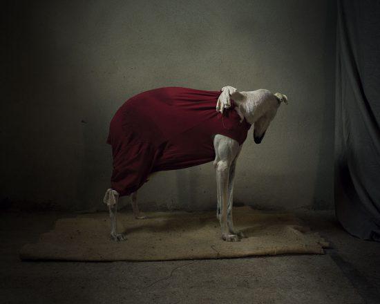 hund spanien tierschutz