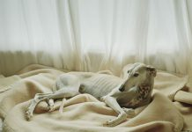 spanische-jagdhunde-fotobuch-usborne-6