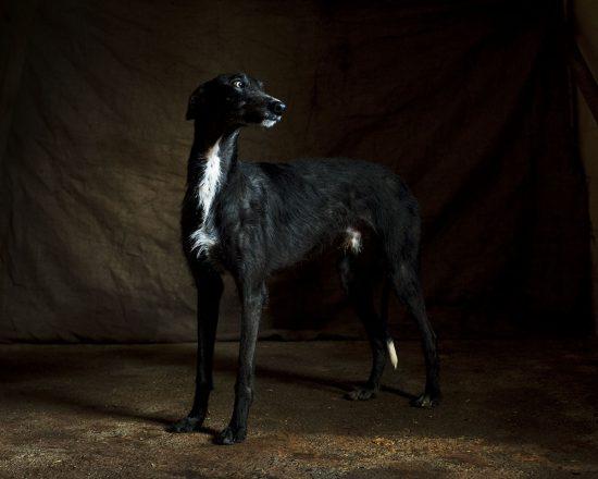 spanische-jaghunde-fotobuch-usborne-11