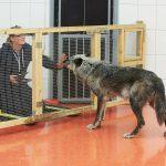 Wolfsforschungszentrum (WSC): Was Wölfe wirklich wollen