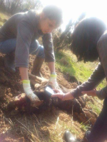 Toter Hund gefunden