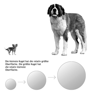 buch-hunde-barfen-alles-ueber-rohfuetterung-von-julia-fritz-enegeibedarf