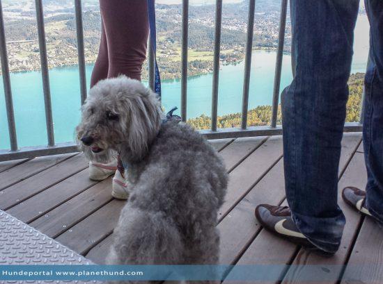 Pyramidenkogel Wörthersee Kärnten Hund