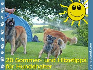 Sommer Hunde Ratgeber