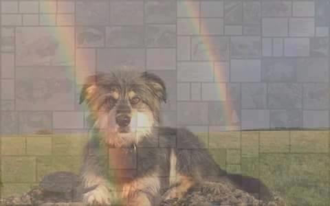 totfundhund regenbruecke hund