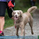 Joggen mit Hund Ratgeber
