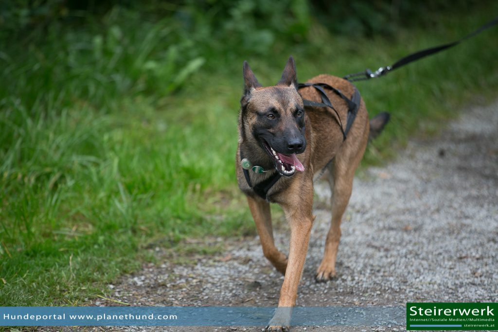Ratgeber Joggen Hund