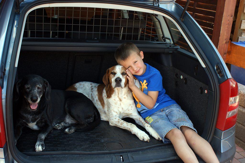 Kofferraumgitter Hunde