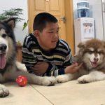 hunde-china-orf