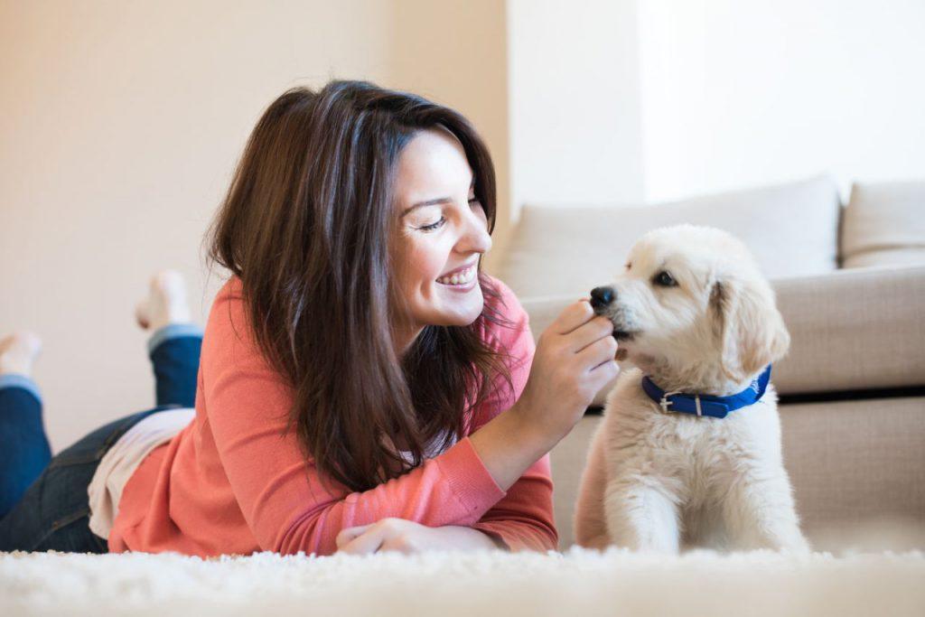 Hunde Ratgeber