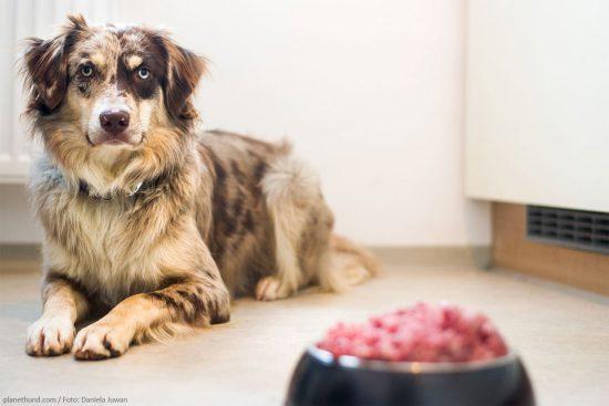 Ratgeber über richtige Ernährung für Hunde