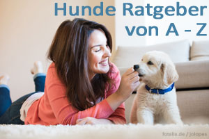 Hunde Ratgeber