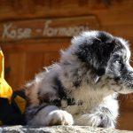 Österreichische Rettungshunde-Staatsmeisterschaft 2015
