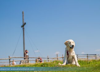 Wandern Hund Ratgeber