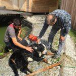 Pöllau: Hund in letzter Sekunde vor dem Ertrinken gerettet