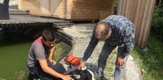 Hund vor Ertrinken gerettet
