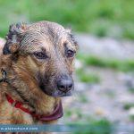 Kleinhunde – vom Drama klein und niedlich zu sein