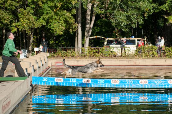 dog-diving-cottbus-am