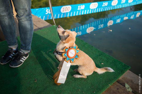 Dog Diving Preis