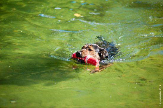 Hundeschwimmen Cottbus