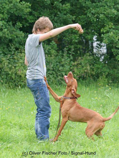 mein freund timmy kind hund