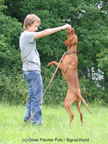 Hund springt nach Leckerli