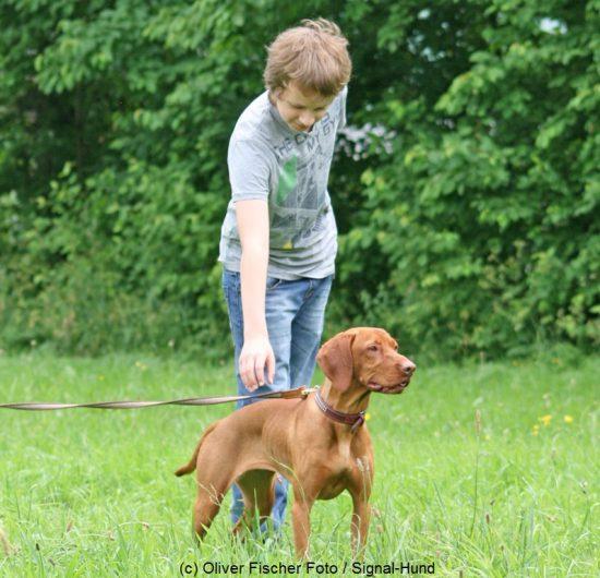 hund junge