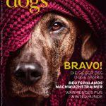 Dogs Award
