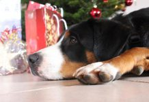 Hund Weihnachten