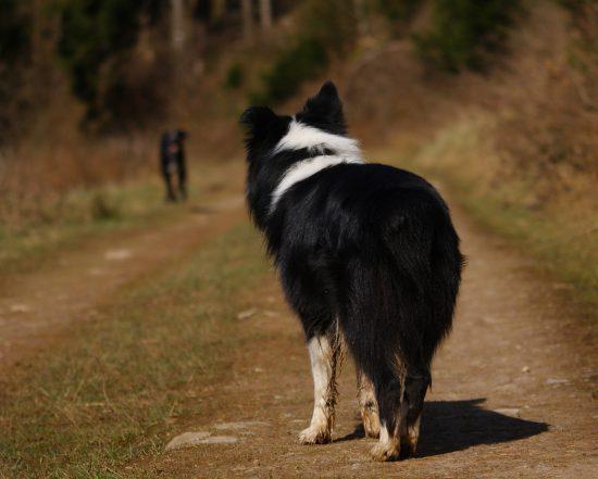 Hunde kommunizieren Körpersprache.