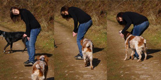 Tauber Hund versteht nonverbalen Rückruf