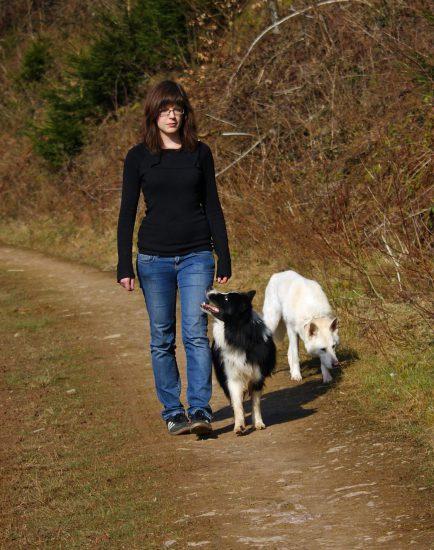 Hund läuft direkt Fuß
