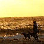 Hundeerziehung und das Geschäft mit der Angst