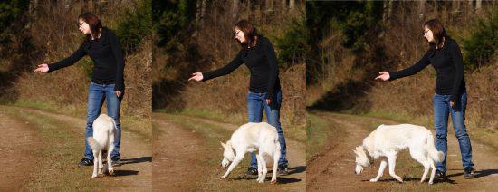 Weg schicken Hund