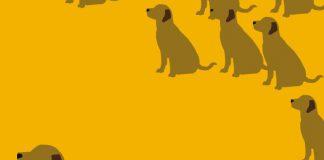 Gespräch über Hunde
