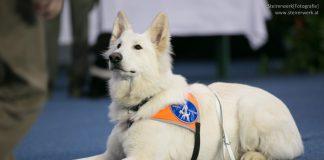 Assistenzhund Blindenhund