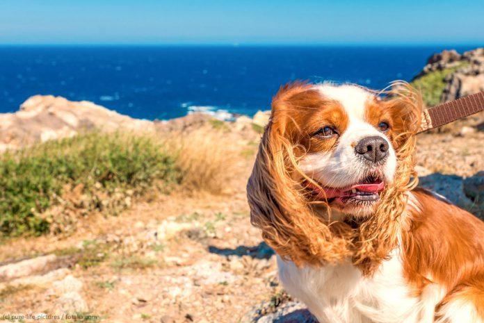 Urlaub Hund Frankreich
