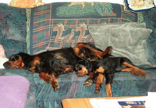 Welpe Hund Couch