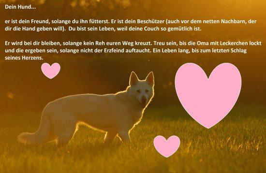 Spruchbild Zitat Herz Schäferhund Husky Mix