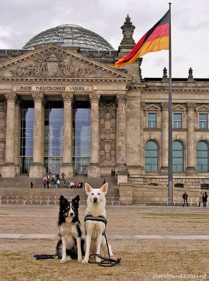 Hunde Berlin Deutschland Flagge