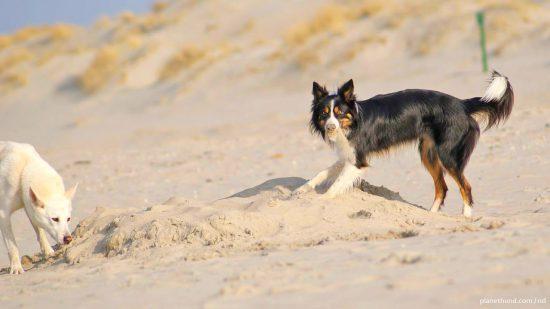 Hundefreundliche Strände Deutschland