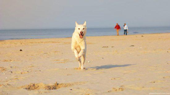 Nordsee Strand Hund