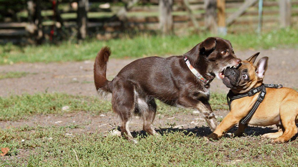 Hund beißt Welpen