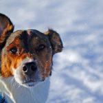 Wenn der Hundebuggy unangenehm wird: Vorurteile unter Hundehalter