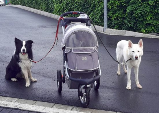 Hundebuggy und Hunde